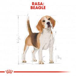 Hrana uscata caini ROYAL CANIN Beagle Adult rasa beagle