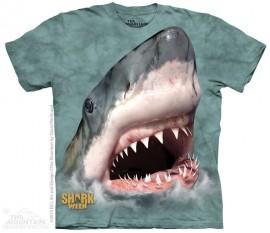 SHARK GREEN immagini