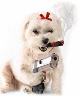 MAGLIETTA IN 100% COTONE DA DONNA TITOLO DOG immagini