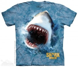 SHARK BLU immagini