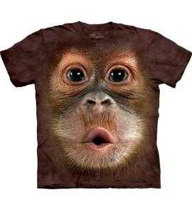 Big Face Baby Orangutan immagini