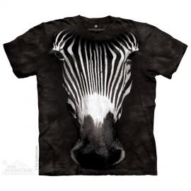 Big Face Grevy's Zebra immagini