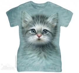 Blue Eyed Kitten immagini