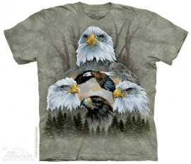 5 Eagle Collage immagini