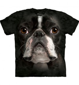 Boston Terrier Face immagini