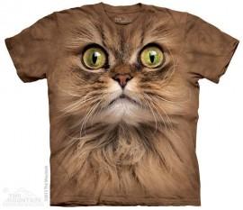 FACE CATS immagini