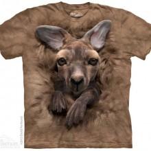 Baby Kangaroo