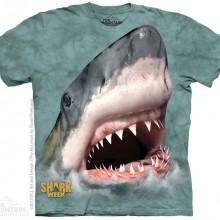 SHARK GREEN