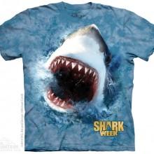 SHARK BLU