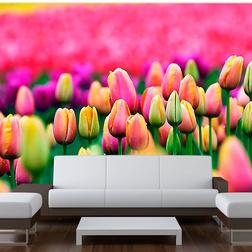 Fotótapéta - Field of tulipán