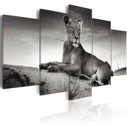 Kép - Lioness in a desert