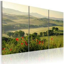Kép - Poppies on Tuscany fields