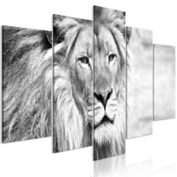 Kép - The King of Beasts (5 Parts) Wide Black and White