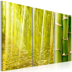 Kép - Bamboo reflected on water