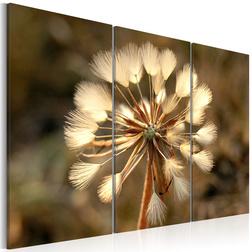 Kép - Study of a dandelion