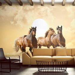 Fotótapéta - Futás lovak