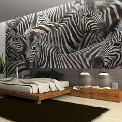 Fotótapéta - Herd zebrák