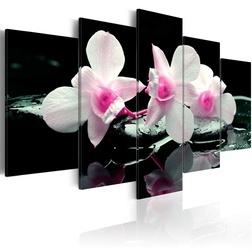 Kép - Rest of orchids
