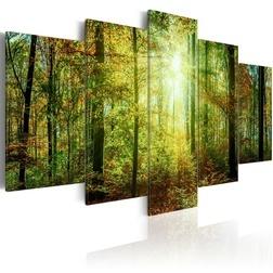 Kép - Wild Forest
