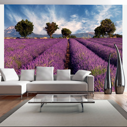 Fotótapéta - Lavender field in Provence. France