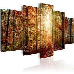 Kép - Autumn Wilderness
