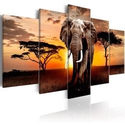 Kép - Elephant Migration