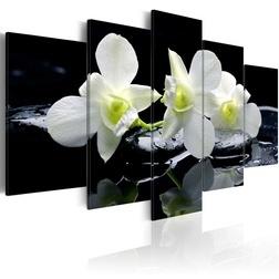Kép - Melancholic orchids