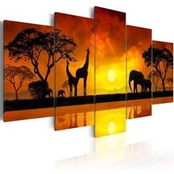 Kép - Savanna - sunset