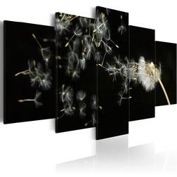 Kép - Moments as ephemeral as dandelions