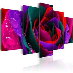 Kép - Multicoloured rose