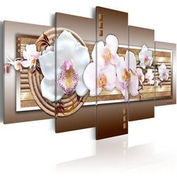Kép - Sensitivity of orchid