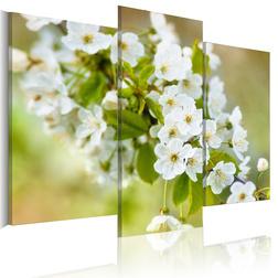 Kép - White cherry flowers motif