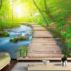 Fotótapéta - Green forest
