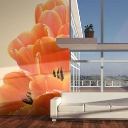 Fotótapéta - Narancssárga tulipán