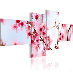 Kép - Beauty of the cherry flowers