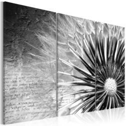Kép - dandelion (black and white)