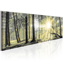 Kép - Morning Forest
