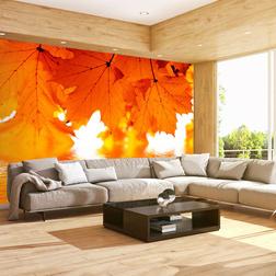 Fotótapéta - leaves - autumn