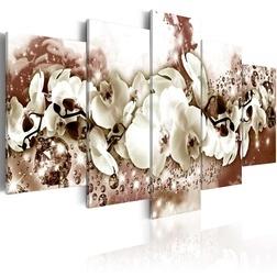 Kép - Chocolate Orchid