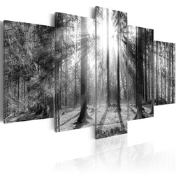 Kép - Forest of Memories