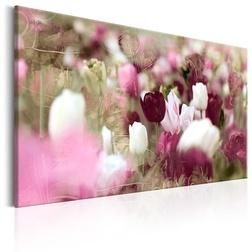 Kép - Meadow of Tulips