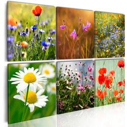 Kép - One thousand colors meadow