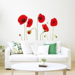 Red Poppy Flowers falmatrica