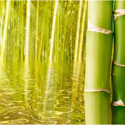 Fotótapéta - Egzotikus hangulatú bambusz