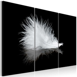 Kép - A small feather