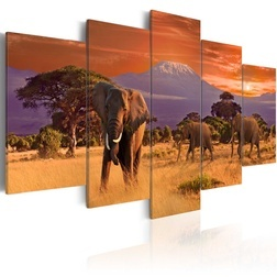 Kép - Africa: Elephants