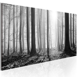 Kép - Black and White Forest