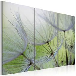 Kép - Dandelions on the meadow