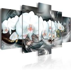 Kép - Magical Orchid