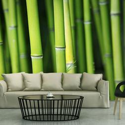 Fotótapéta - Bamboo